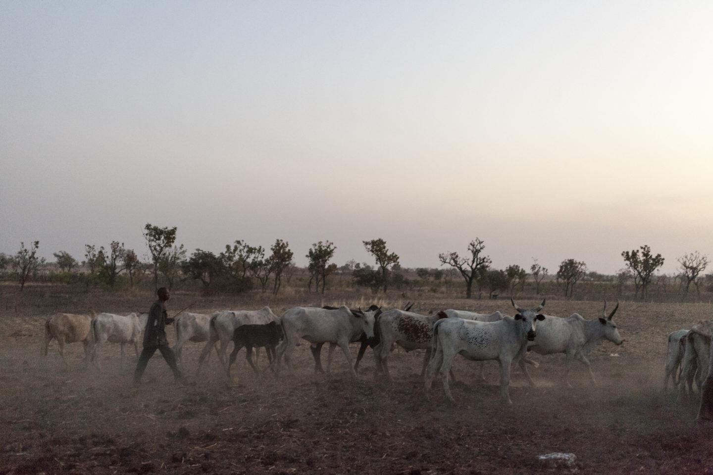 Agropasteur et troupeau