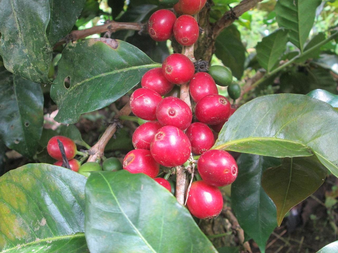 Agroécologie en Colombie