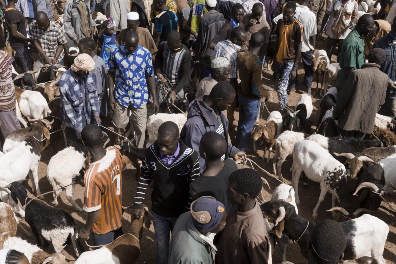 Marché au bétail de Fada N'Gourma, Burkina Faso