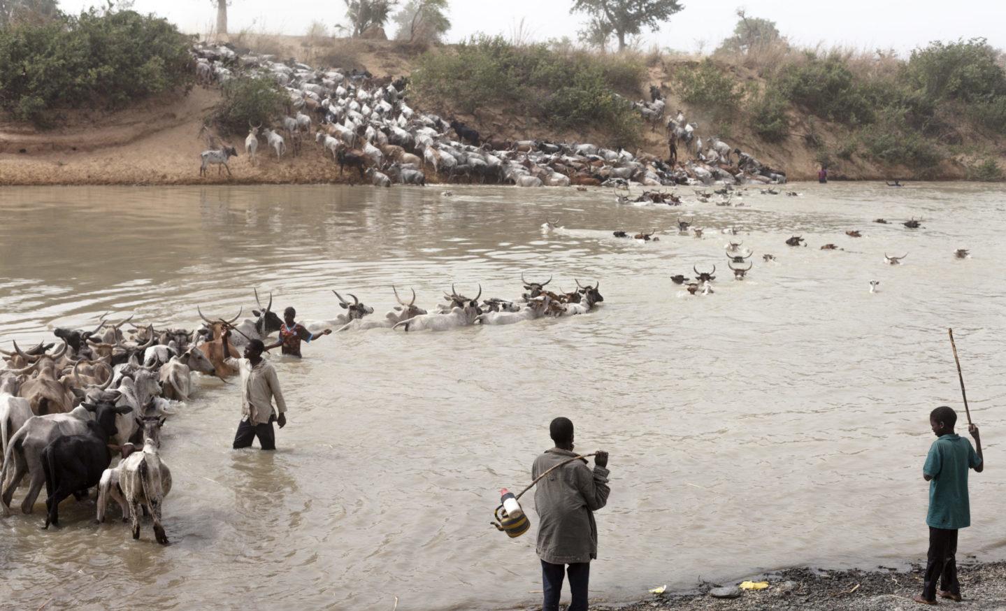 Transhumance 2016 au Burkina Faso