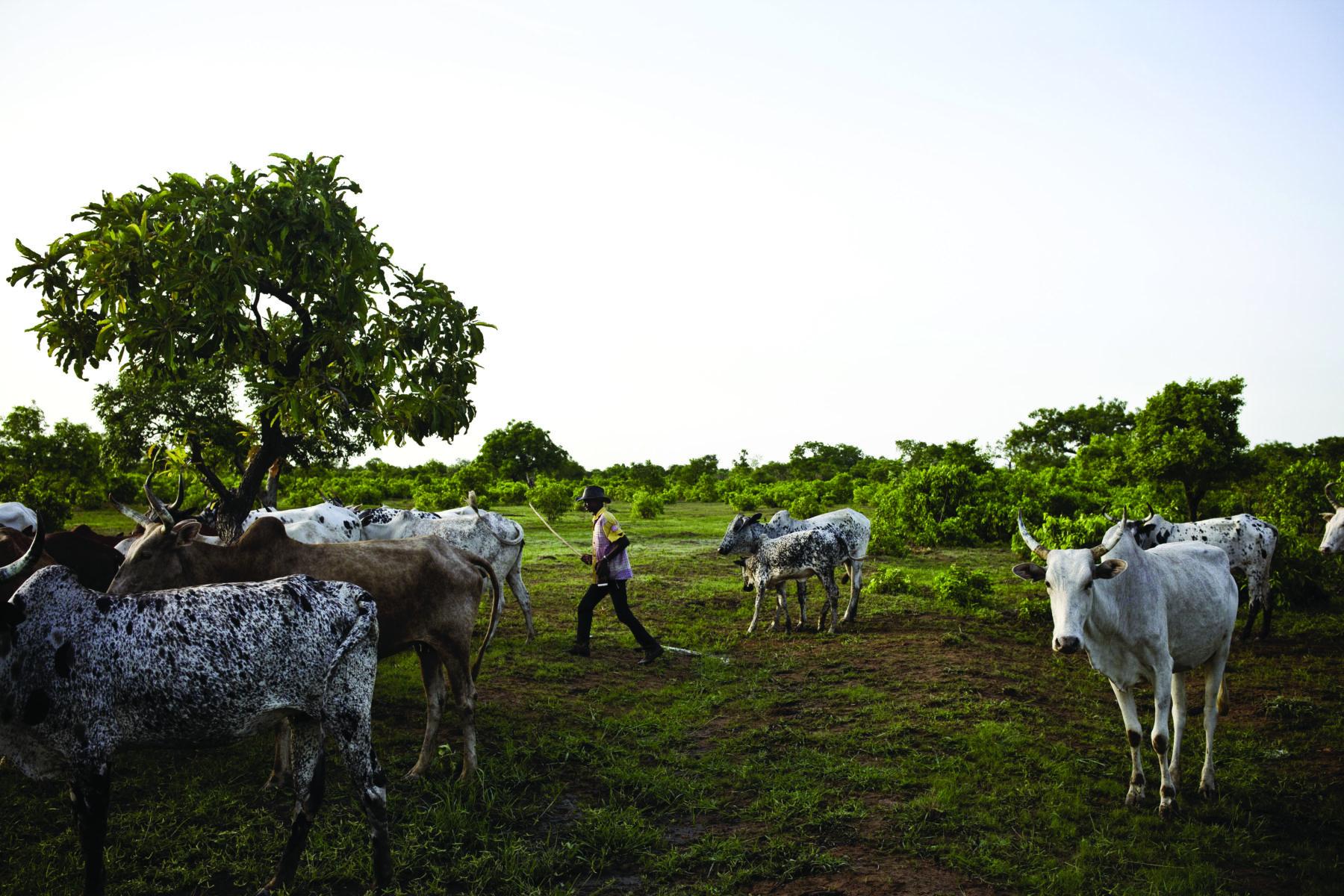 Campement de Tiennego, Togo