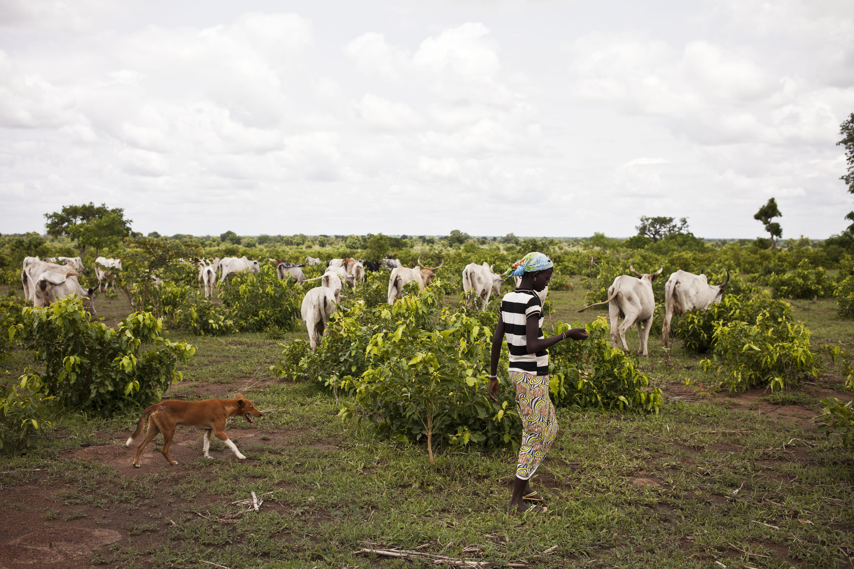 Campement de bergers Togo