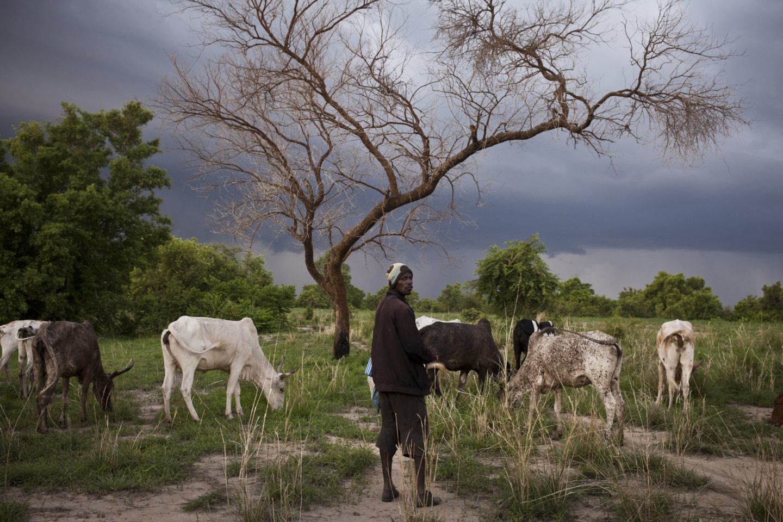 Groupe de bergers qui remontent au Nord Togo