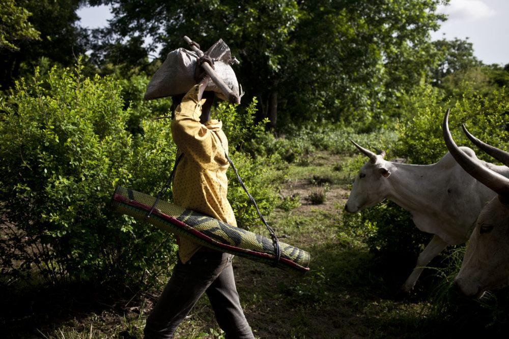 Remontée au Nord Togo des bergers.