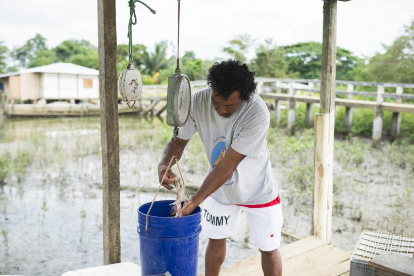 Pêche artisanale crevettes