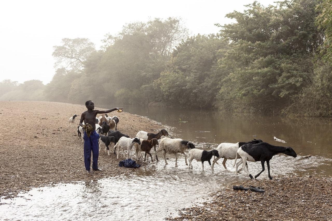 Transhumance pastorale Burkina- Faso-Togo