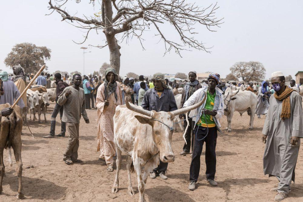 Marché à bétail