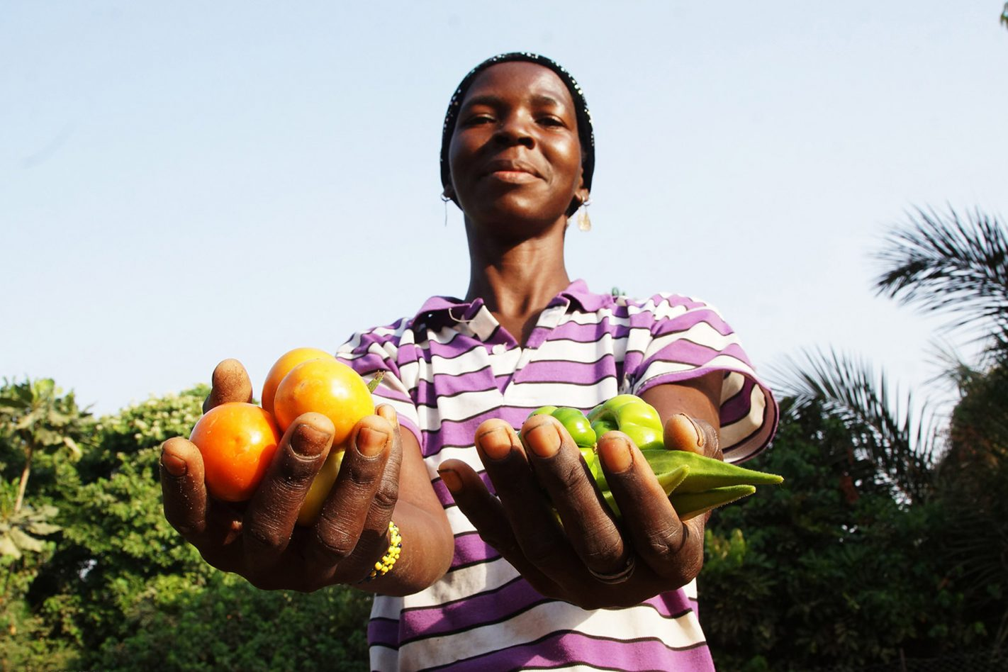 Récolte au Burkina Faso