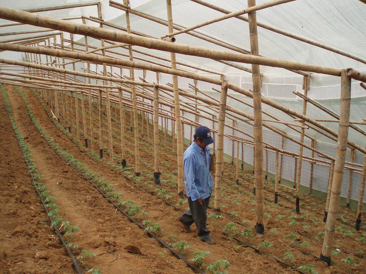 Récolte sous serre Colombie