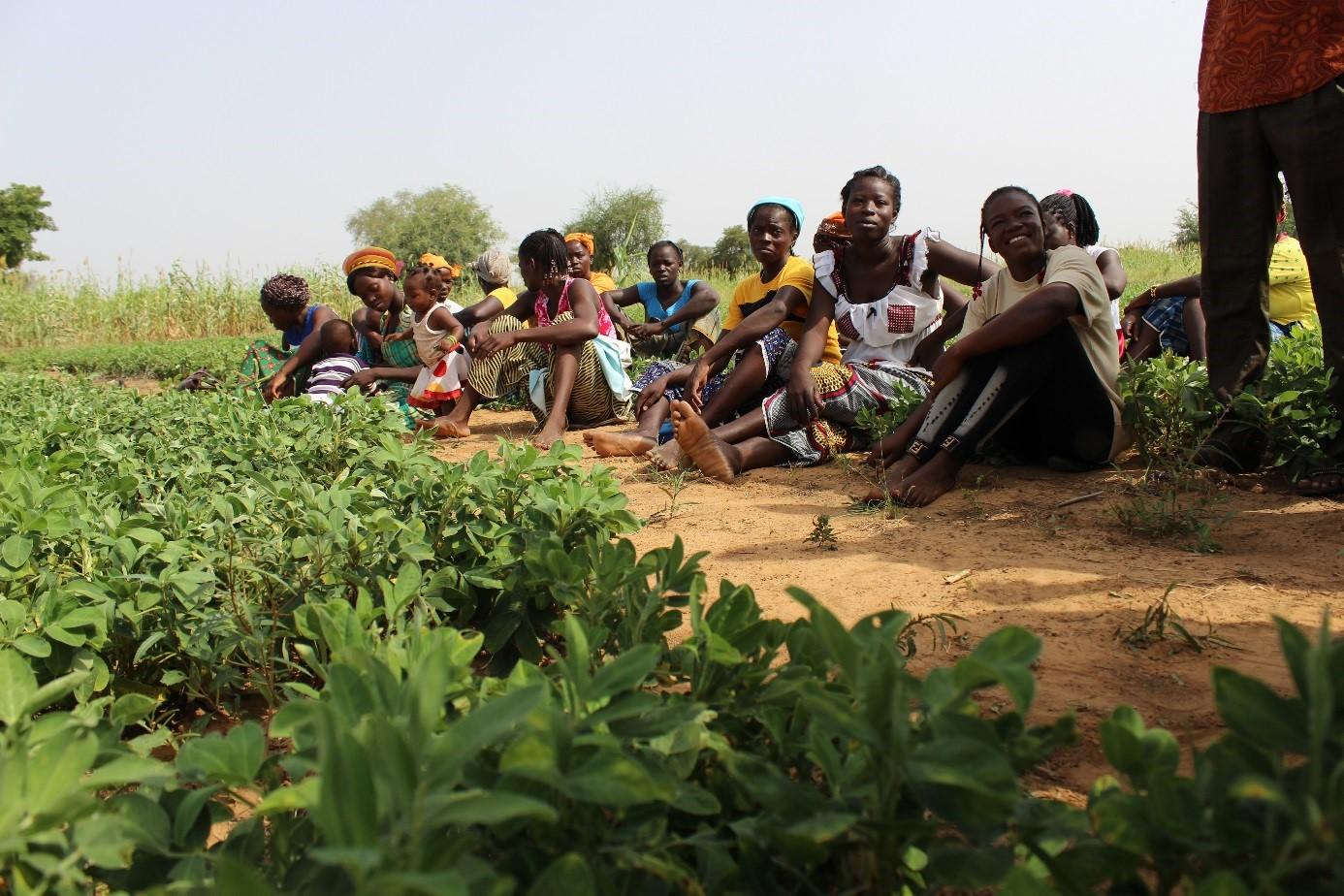 Bénéficiaires du projet PROFIL dans leur champs